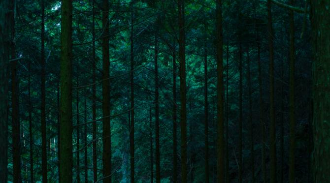 豊かな自然で育まれた熊野の森の木々